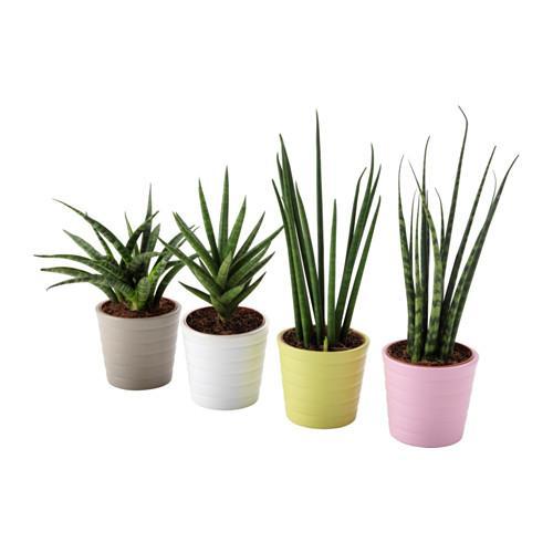sansevieria-plant-met-sierpot-diverse-kleuren__0485374_pe621503_s4
