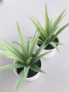 Kunstplantjes - Ikea shoplog Lievelyne