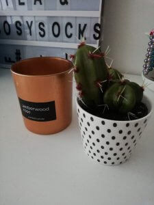 Cactus nep Action,- Action shoplog Lievelyne