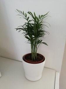 plant - Ikea shoplog mei 2019